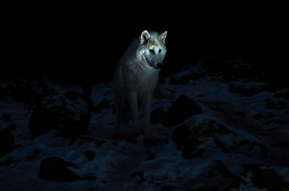 Mátyás Misetics: Landscape, Tundrawolf