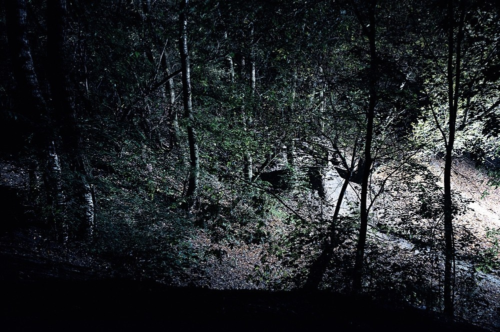 Mátyás Misetics: Landscape, Forestlight I.