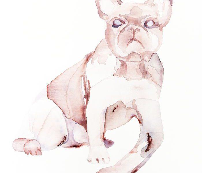 Nemes Anna: Bulldog ember karral