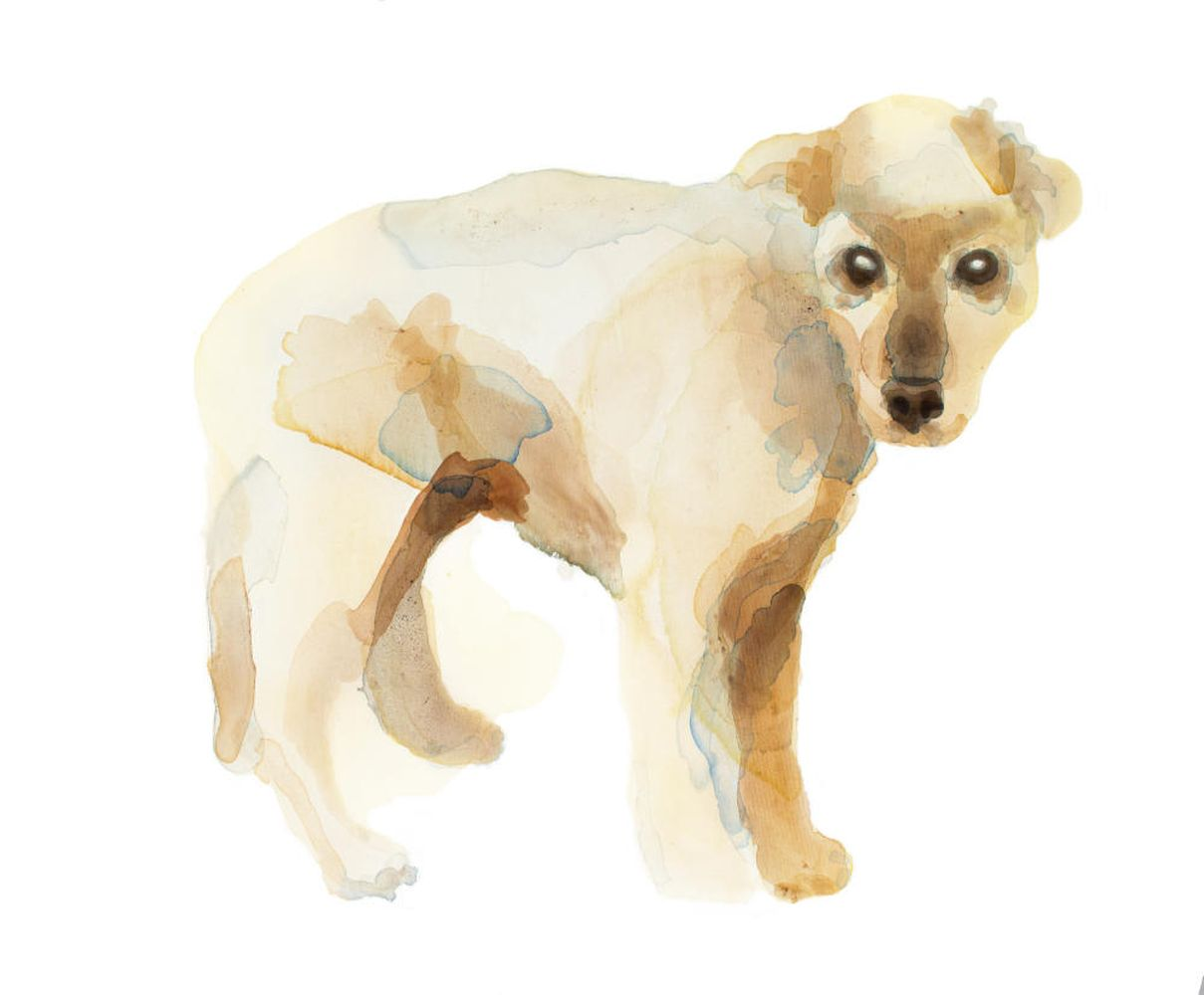 Anna Nemes: Yellow Dog from a Shelter