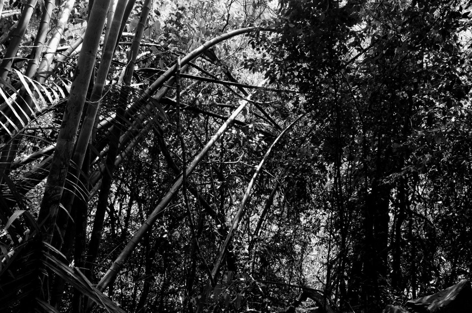 franyo aatoth: Brushwood