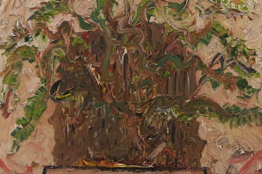aatoth franyo: Pachypodium