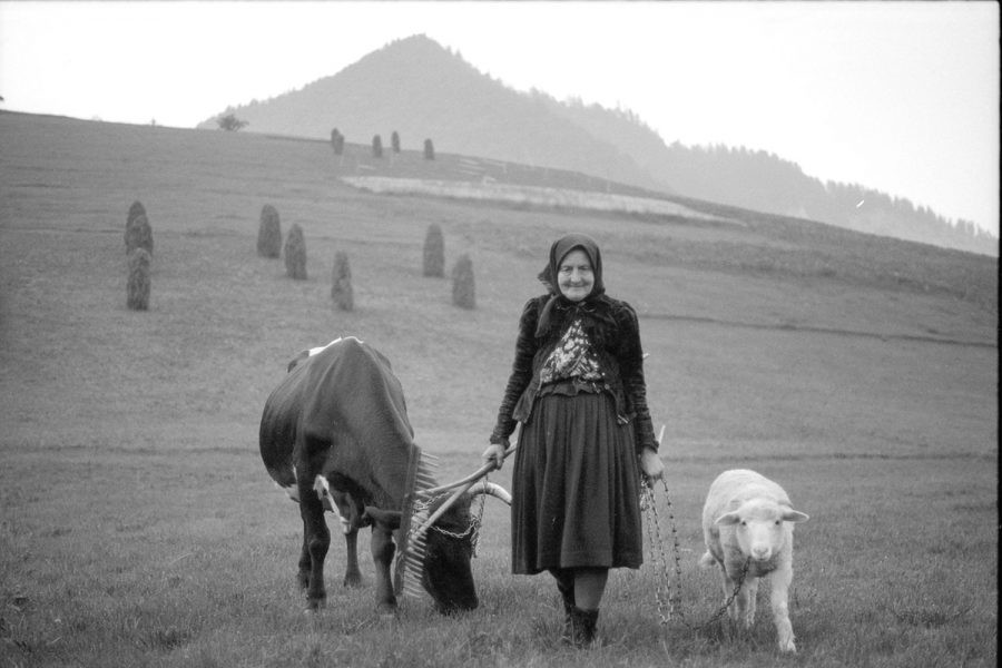 Péter Korniss: On the Way Home from the Pasture