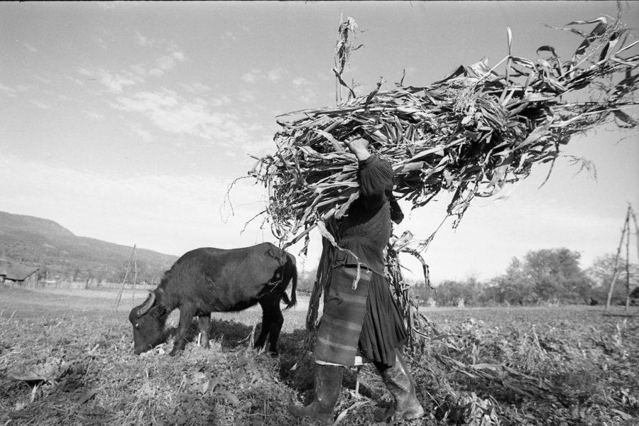 Korniss Péter: Kukoricát vivő asszony