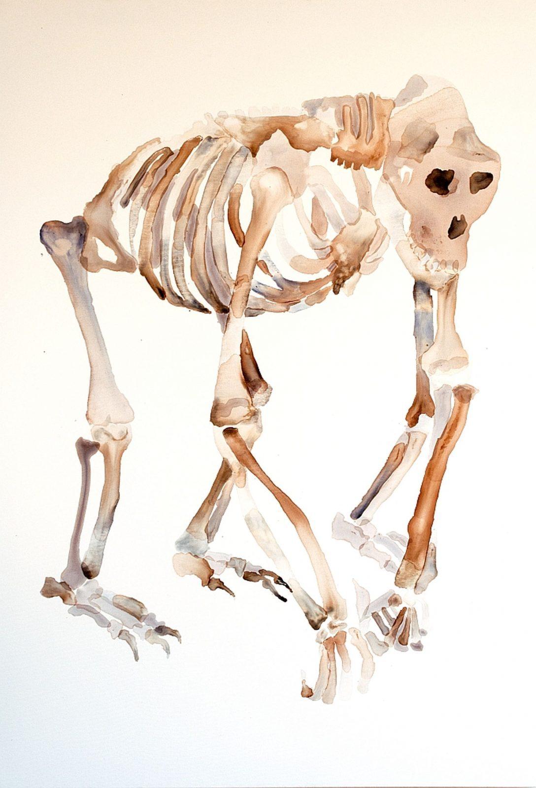 Nemes Anna: Gorilla csontváz