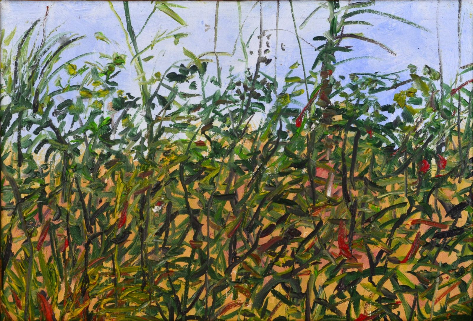 franyo aatoth: Garden Series 8.
