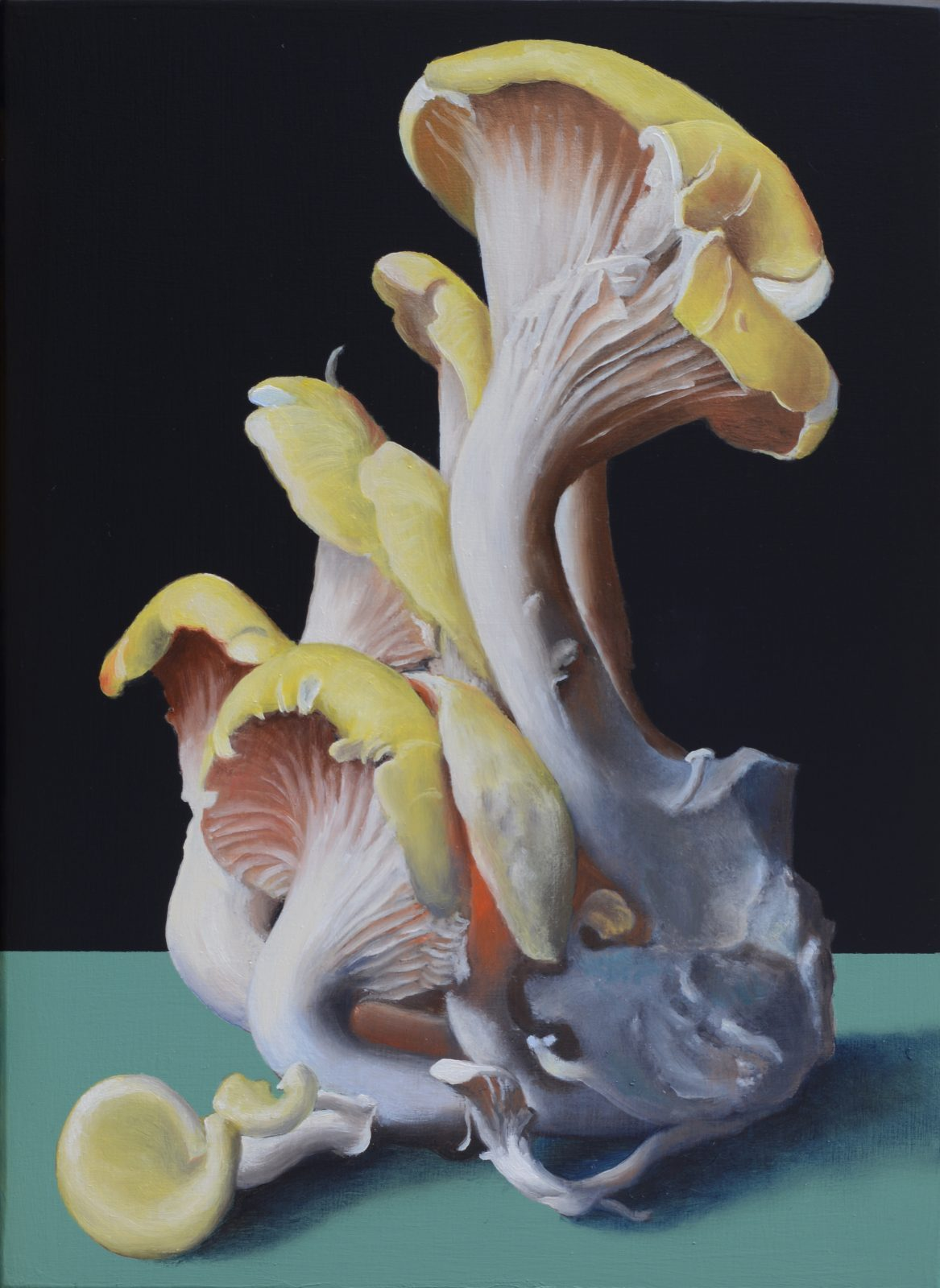 Máté Orr: Life of Mushrooms